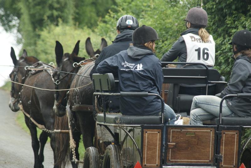 concours d'endurance en attelage avec des mules poitevines de l'Asinerie du Baudet du Poitou