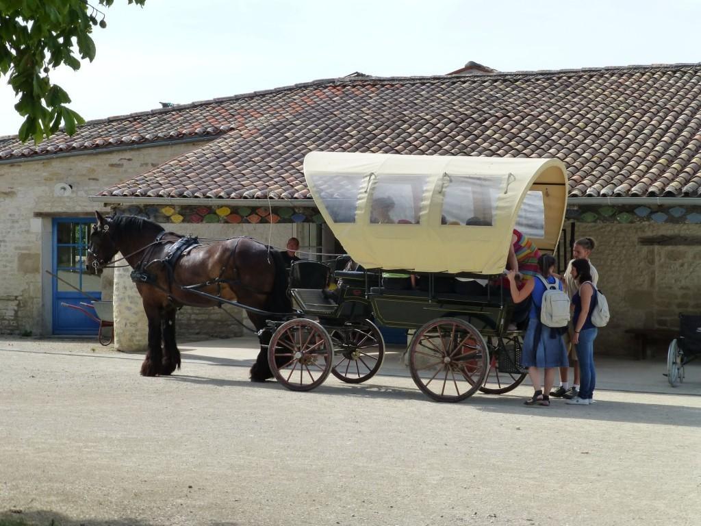 promenade en calèche avec un cheval de trait à l'Asinerie