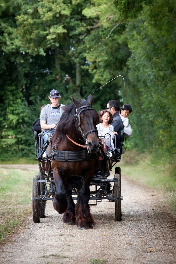 safari en attelage à l'Asinerie du Baudet du Poitou