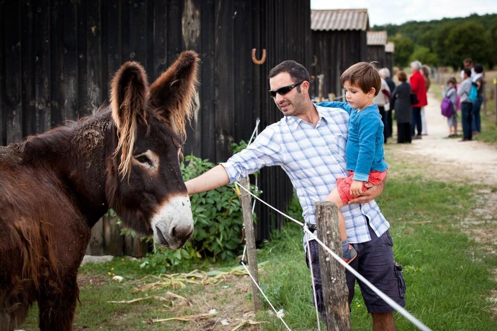 visite libre à l'Asinerie du Baudet du Poitou