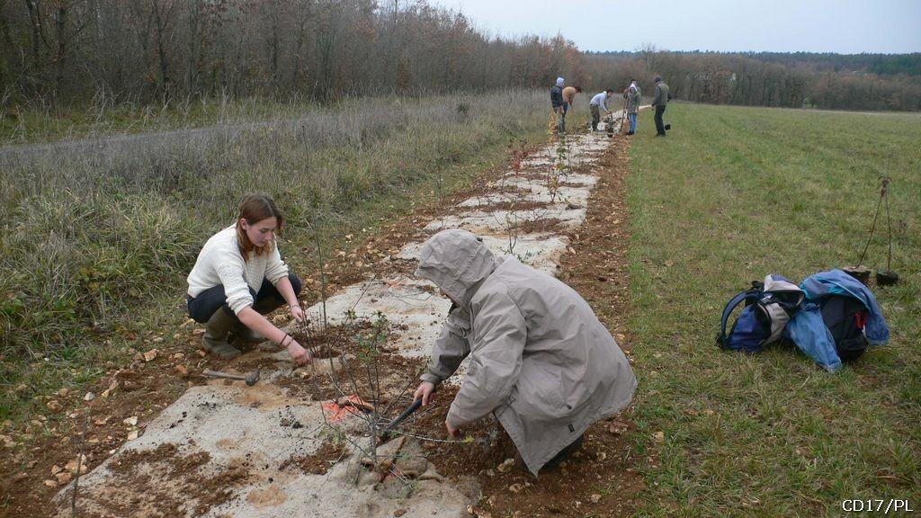 chantier école plantation de haie sur l'espace naturel sensible de l'Asinerie du Baudet du Poitou